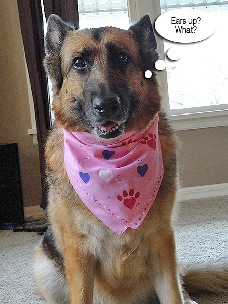 Valentine Pet Bandana