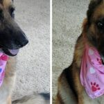 pet-bandana-featured