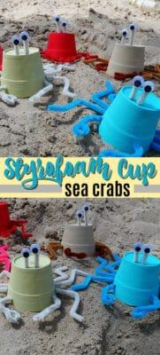 styrofoam cup sea crabs pin image
