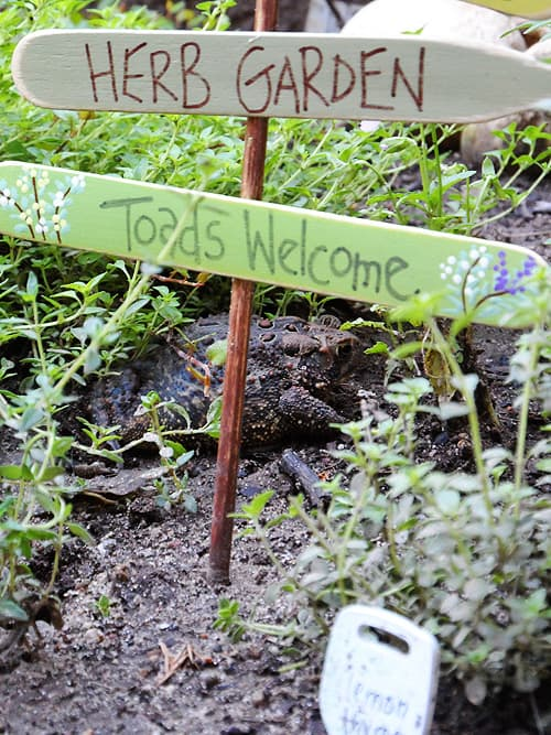 Herb Garden Sign: Toads Welcome CraftsbyAmanda.com