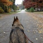Comfort Zone® with D.A.P.® for Dogs