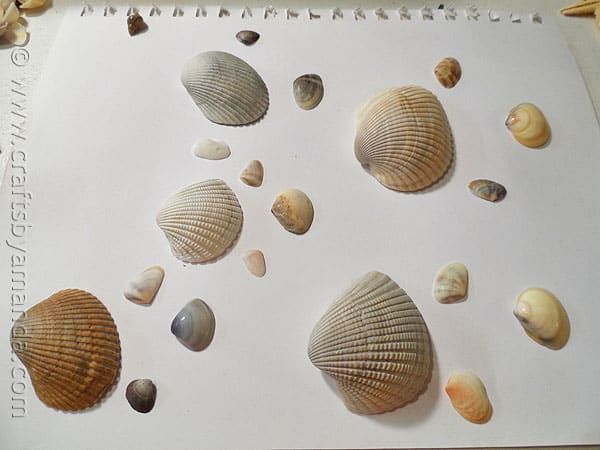 How to make seashell fish crafts by amanda - Types of seashells for kids ...