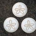 Paper Plate Sand Dollars
