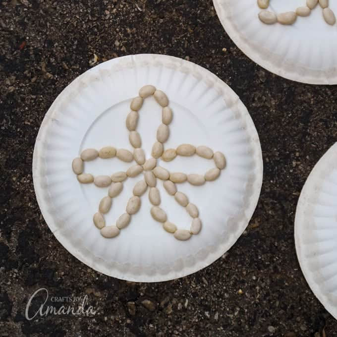 sand dollar craft made from paper plates and beans