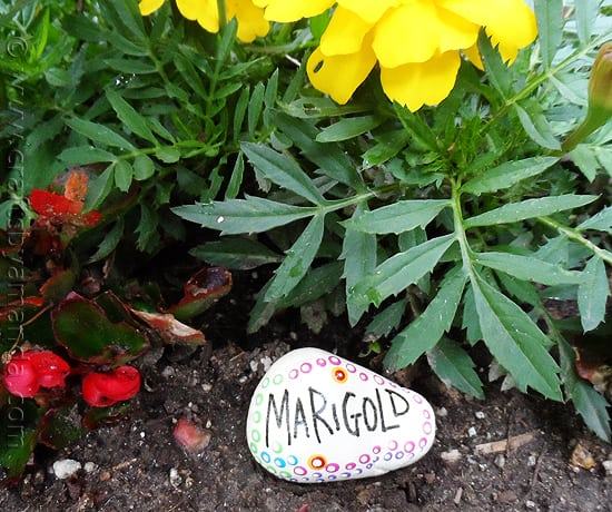 These beautiful rock garden markers have been painted with special outdoor paint. They look beautiful in the garden - get the instructions to make your own!
