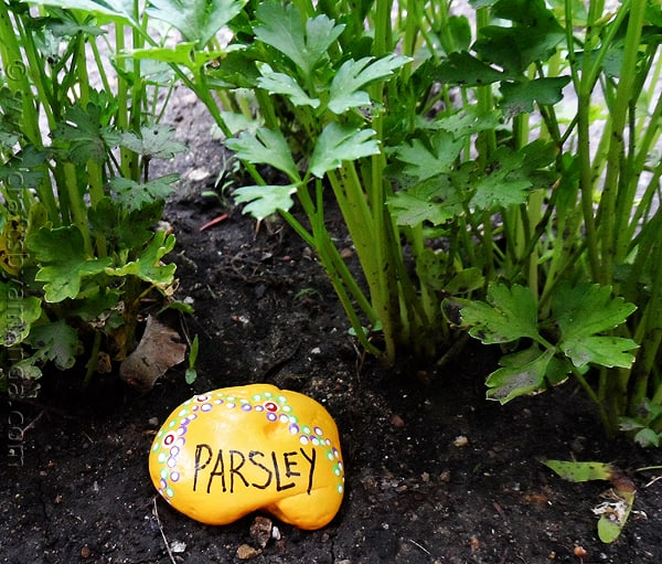 Rock garden markers paint rocks to make markers for your - Painting rocks for garden what kind of paint ...