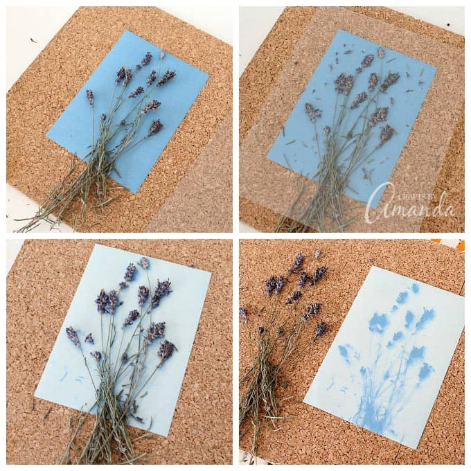 pressing down dried flowers onto sun print paper