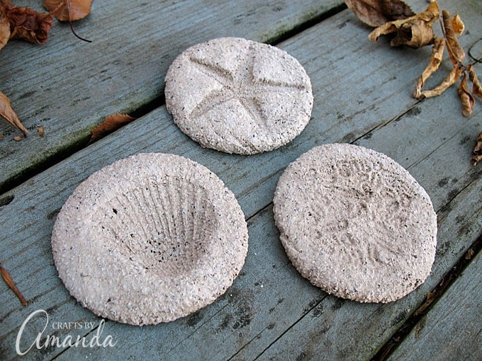 Coffee Ground Fossils using seashells, starfish, and anemones