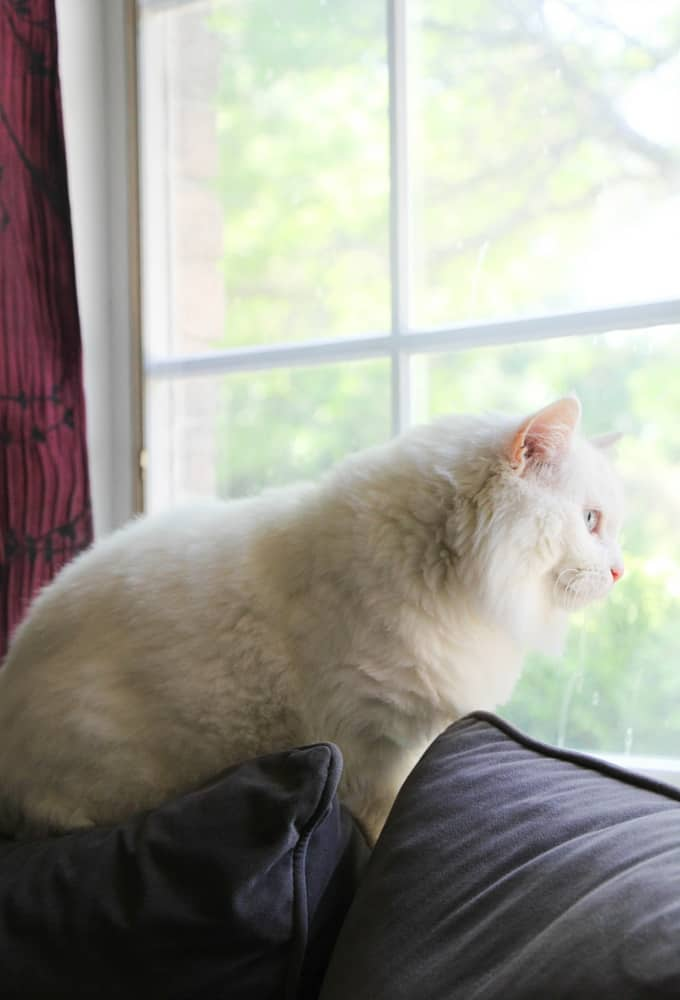The Secret Life of My Cat