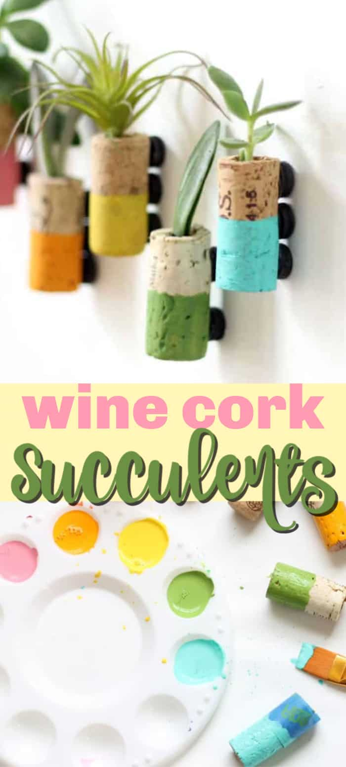 wine cork succulent magnets pin image