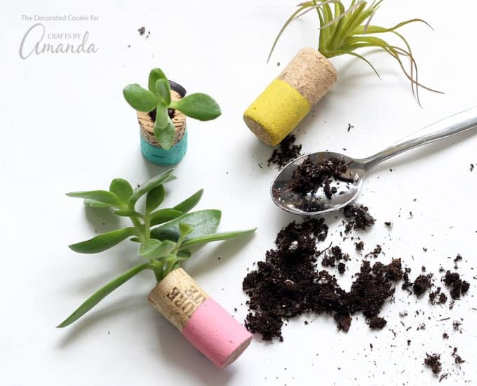 Add your soil and succulent and adhere to a magnetic surface.