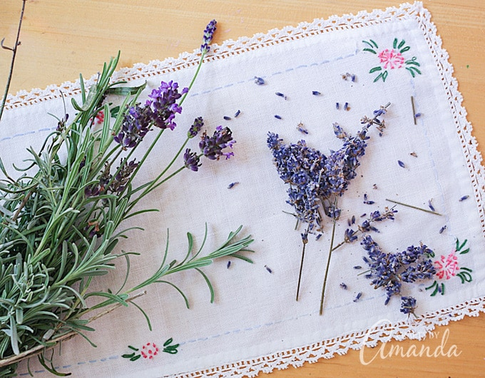 Lavender is a perennial, so you can enjoy its beauty and aromatic scent every year after planting it only once!