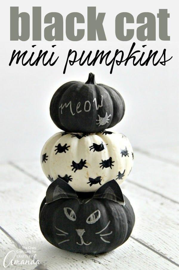 Black Cat Mini Pumpkins- No carve pumpkin decorating!