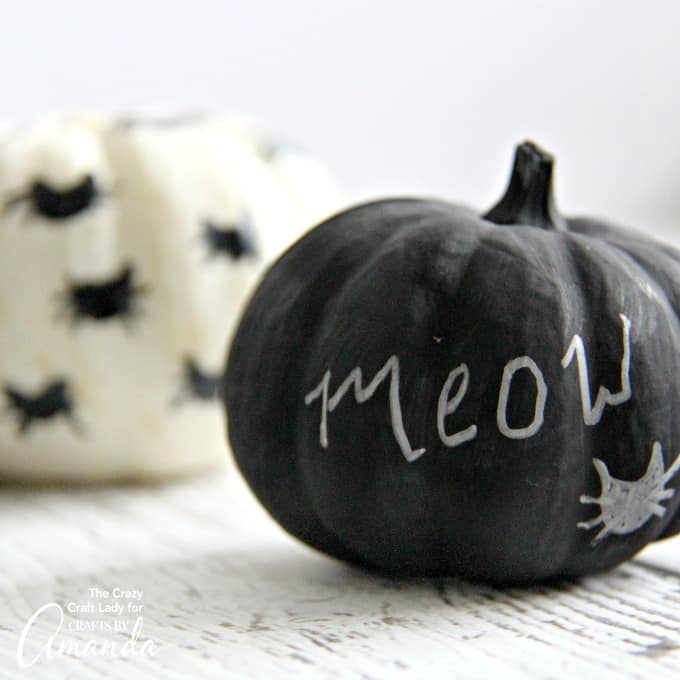 "Black Cat Mini Pumpkins - ""Meow Pumpkin"""