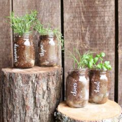 Add this mason jar herb garden to your home for spring!