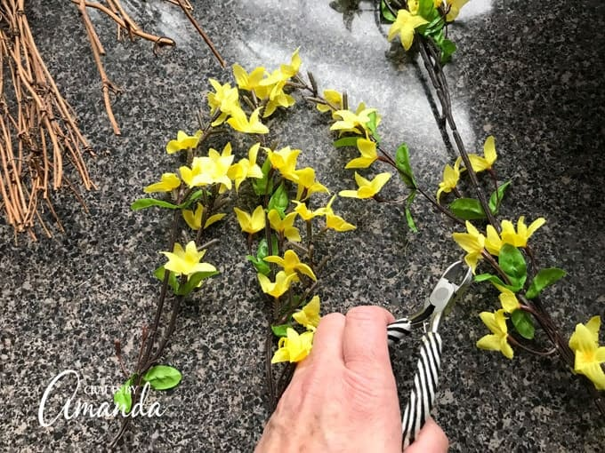 Cut the sprigs of forsythia flowers from the branch
