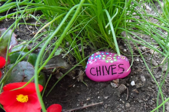 Painted Rock Garden Markers, Chives