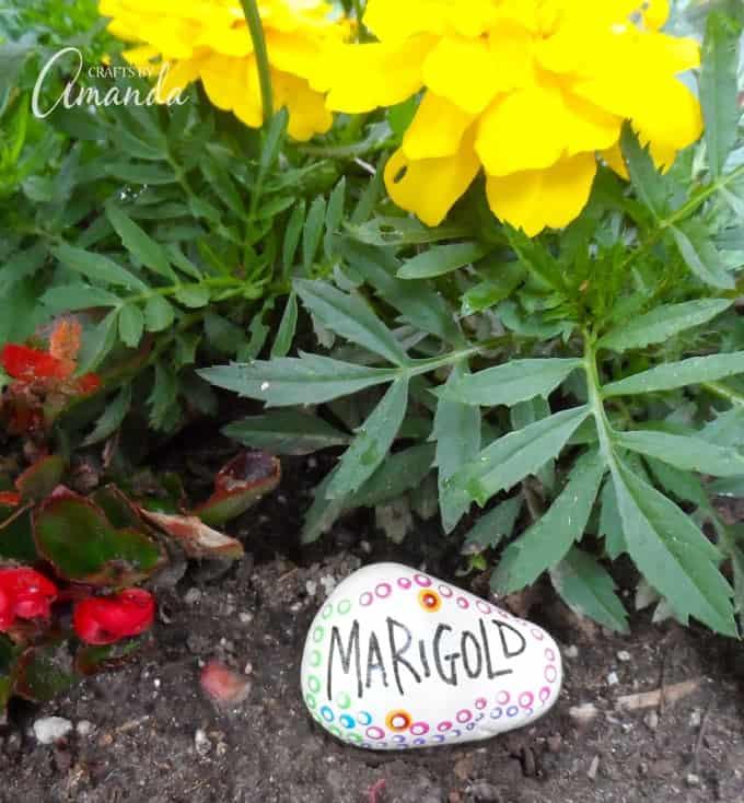 Painted Rock Garden Markers, Marigold