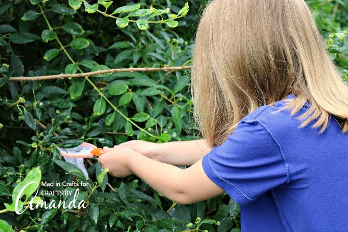 girl catching bug in scavenger hunt