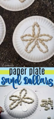 paper plate sand dollars pin image