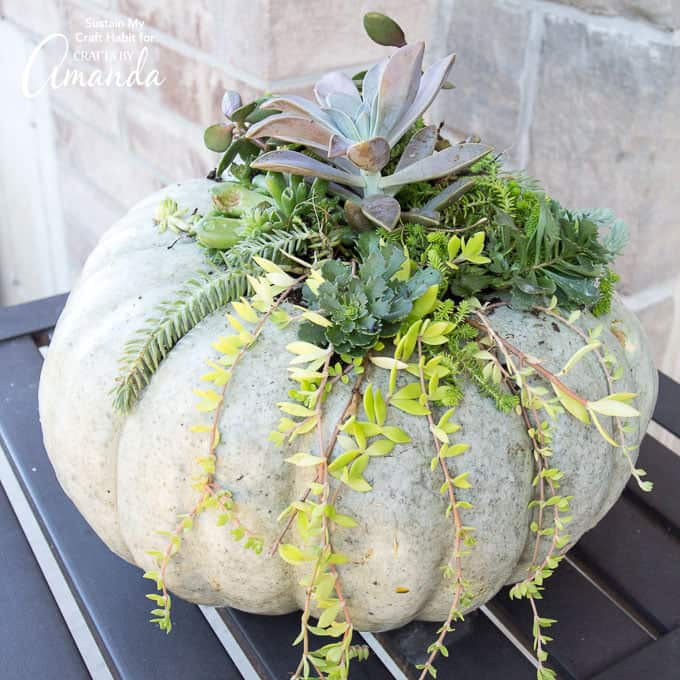 Pumpkin filled with succulents