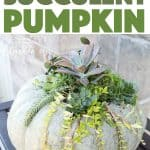Create your own beautiful and natural DIY succulent pumpkin decor for the Fall simply with these easy to follow instructions. #succulent #pumpkin #succulentpumpkin #pumpkincrafts #adultcrafts #falldecor #fallcrafts #diy #greenery