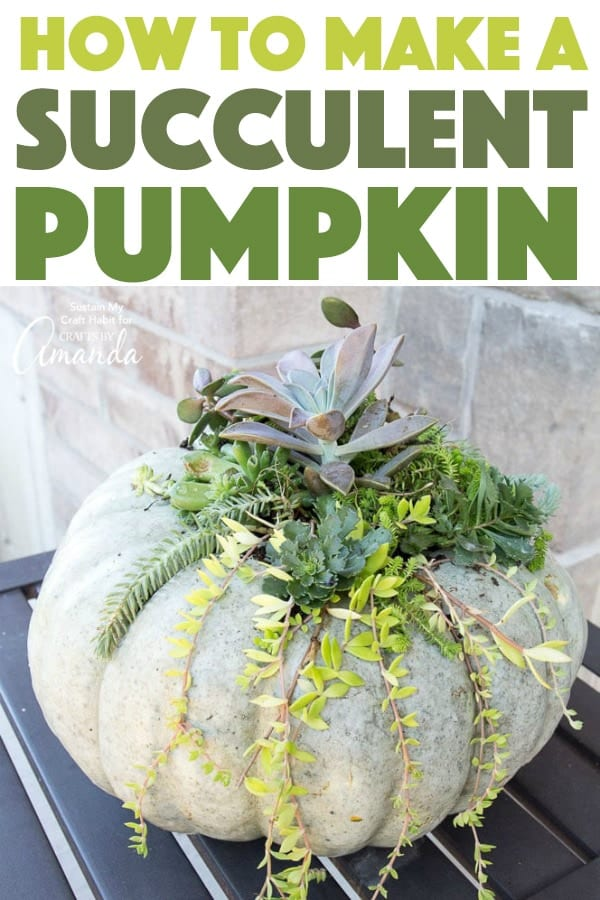 How to make a Succulent Pumpkin