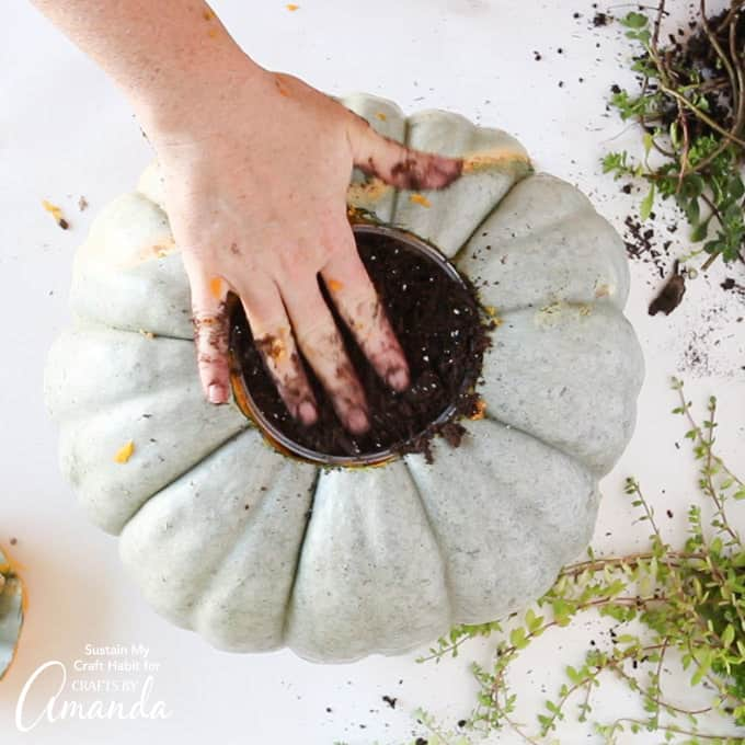 Patting down soil in the pumpkin