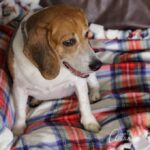 No-Knot Fleece Blanket & Dog Gift Basket