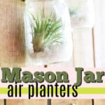 mason jar air plant holders pin image