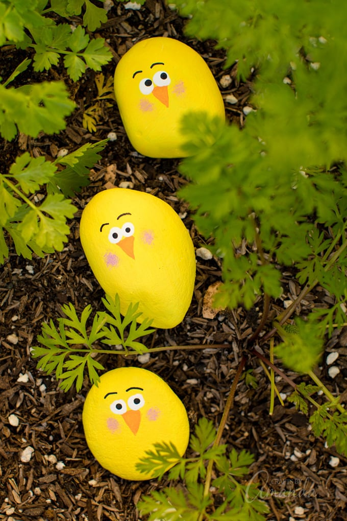 3 yellow painted rock chicks in the garden